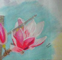 Zeichnung, Pastellmalerei, Magnolien, Zeichnungen