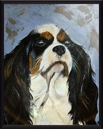 Spaniel, Blau, Hund, Portrait