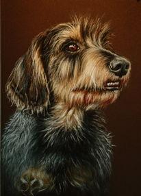 Rauhaardackel, Tierportrait, Hundeportrait, Hund