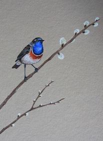 Vogel, Blaukehlchen, Malerei