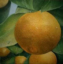 Süden, Pflanzen, Orangenbäumchen, Ölmalerei