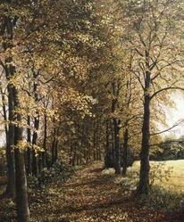 Wald, Weg, Realismus, Natur
