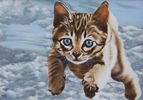 Fliegen, Luft, Blau, Katzenportrait