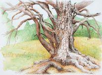 Baum, Waldkiefer, Tuschmalerei, Studie