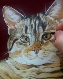 Tiere, Silberblick, Katze, Tierportrait
