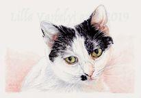 Tierportrait, Katze, Tuschezeichnung, Gegenlicht