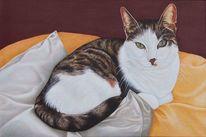 Tiermalerei, Gemütlichkeit, Katze, Faltenwurf