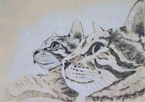 Katze, Katzenmix, Augen, Tiere