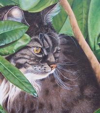Langhaarkatze, Katzenportrait, Tierportrait, Blätter