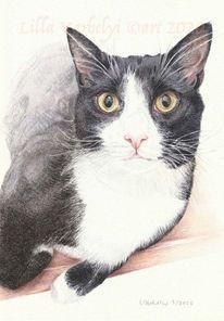 Auftragszeichnung, Katze, Tierportrait, Tierzeichnung