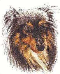 Federzeichnung, Tiere, Portrait, Hund