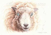 Schaf, Tierportrait, Wolle, Tuschmalerei