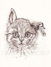 Zeichnung, Katze, Tusche, Hybride