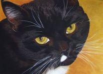 Tierportrait, Augen, Schwarzekatze, Schichtenmalerei