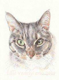 Tierzeichnung, Tierportrait, Katze, Tusche