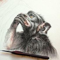 Tuschmalerei, Tierwelt, Wip, Tierzeichnung