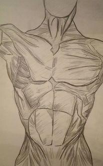 Muskulatur, Mann, Körper, Zeichnungen