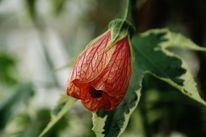 Botanik, Fotografie, Blüte, Zart