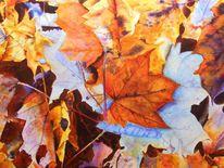 Natur, Blätter, Herbst, Wald