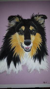 Pastellmalerei, Portrait, Hund, Collie