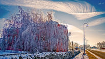 Weide, Raureif, Winter, Frost