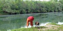 Hund, Fisch, Wasser, Neugier
