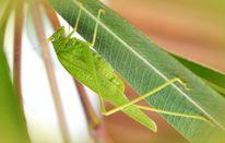 Heuschrecke, Oktober, Natur, Garten