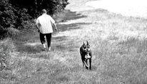 Boxer, Ausflug, Hund, Göttergatte