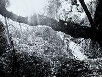 Schwarz weiß, Sommer, Natur, Gewässer