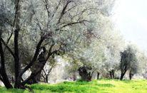 Idylle, Baum, Olivenbaum, Fotografie