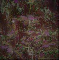 Wald, Blätter, Geheimnis, Zweig