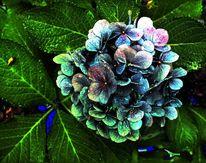 Hdr, Pattanaik, Hortensien, Blätter