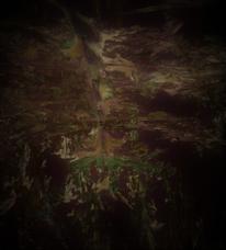 Wald, Tannenwald, Schrei, Maske