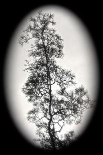 Baum, Zweig, Wald, Schwarz weiß