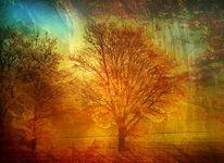 Licht, Himmel, Natur, Herbst