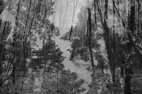 Wald, Doppelbelichtung, Fotografie