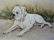 Hundezeichnung, Bulldogge, Hundeportrait, Zeichnungen