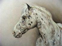 Pferdezeichnung, Pferdeportrait, Knabstrupper, Zeichnungen