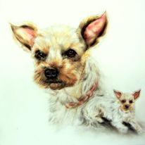 Hundeportrait, Hund, Hundezeichnung, Zeichnungen