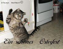 Katze, Katzenhaus, Ostern, Felidae