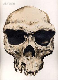 Homo erectus, Steinzeit, Historie, Schädel