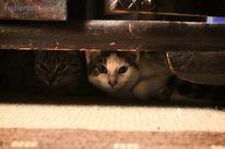 Tierheim, Katze, Katzenhilfe, Felidae