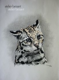 Katze, Ozelot, Tiere, Leipzig