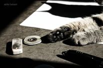 Zeichnung, Tiere, Pause, Katze