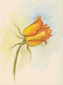Aquarellmalerei, Blumen, Rose, Aquarell