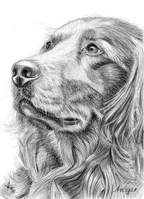 Hund, Tiere, Portrait, Bleistiftzeichnung