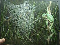 Spinnennetz, Spinne, Grün, Malerei