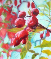 Früchte, Himmel, Rot, Strauch