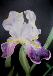 Illustrationen, Iris