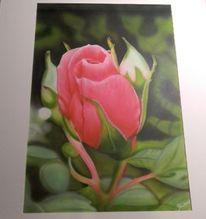 Illustrationen, Rose